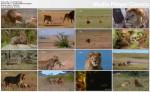 Lwy kanibale / Brutal Killers (2011) PL.720p.HDTV.x264 / Lektor PL