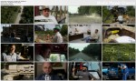 Zaw�d drwal / American Loggers (Season 2) (2010) PL.TVRip.XviD / Lektor PL